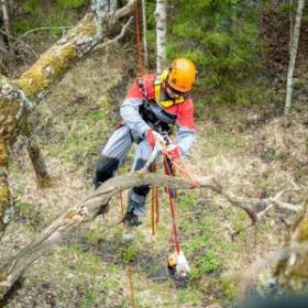 Удаление деревьев c завешиванием